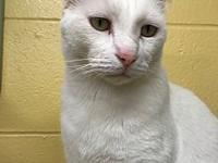 Angel's story Angel is a super friendly, sweet, adult,