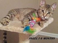 Angel's story Meet Angel, she is being re homed due to