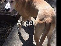 Angel's story Angel might be petite but shes got a lot
