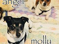 Angel - Molly's story Angel and Molly here! We are