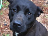 Meet Angel! Angel is a 37 lb Shepherd, Kelpie mix with