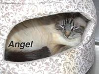Angel's story Our pets are spayed/neutered and current
