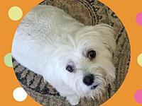 My story Angel is a 8 year old maltese. She is fully
