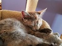 Angela's story I am a beautiful, female tortoiseshell