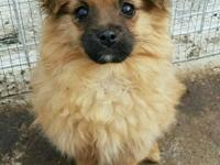 Meet Angela! She is a 4 month old Pomeranian mix that