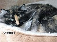 Angelica's story ~~Very pretty young cat who arrived