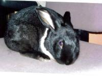 Angora Rabbit - Cloud - Medium - Young - Rabbit I love