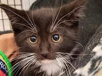 Angus's story   Keller's Kats Rescue Inc. is a