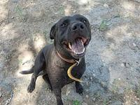 Angus's story Hi! I'm Angus! I am a 3 year old love