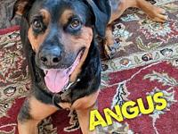 Angus's story Angus is a 3 year old, male,