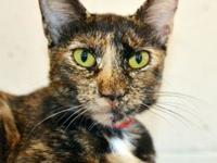 Ani's story - Ani is an affectionate and outgoing young