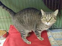 My story Ani is a sweet silver tabby female cat, aged 2