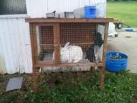 Animal Hutch and rabbits 50.00 call  call or text