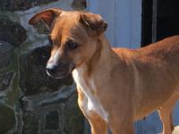Sweet Anita!  Warmth and gentleness fills this Whippet