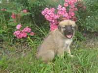 Castlerock's Anatolian Shepherd Dogs are Exceptionally