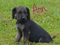 Ann's story Ann is cute and playful and looking for a