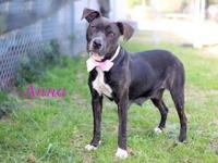 Anna's story Sweet Anna is ready to find her forever