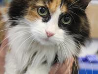 Hello.  My name is Anna.  I am a 8 year old calico cat.