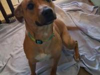 Anna is a cute 2 year old Shepard Mix. This little girl
