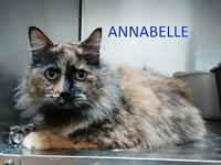 Annabelle's story Meet Annabelle. She is a beautiful