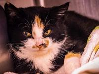 Annabelle's story ~~Annabelle is a very shy yet sweet