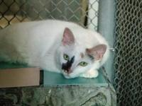 Annabelle's story Annabelle is a social cat who loves
