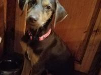 Annabelle is a petite and sweet saluki/terrier mix.