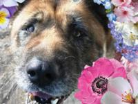 Annie is a mellow senior girl who needs a second