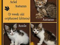 Annie Ariel & Autumn's story This beautiful trio of