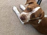 Annie's story All adoptions are $200 per dog which