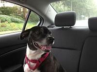 Annie's story Annie is a very sweet girl looking for a
