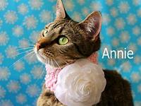 Annie's story The adoption fee is $85.00 with an