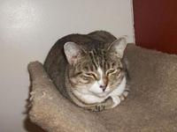 Annie's story Annie, a fancy tabby is a quiet girl that