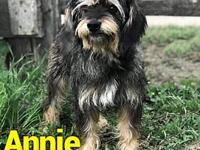Annie's story Annie is a 4 year old, female, terrier