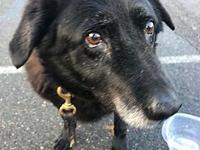 My story ANNIE is an 8-year-old spayed female black