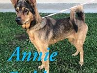 My story Annie Oakley is a 1-2 yr old Shepherd mix.