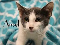 Ansel's story The adoption fee is $85.00 with an