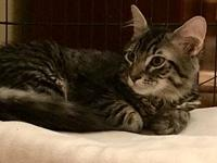 Ansel18's story All Purr Partners Adoptable Cats &