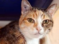 Antenna's story Antenna is a 14 yr old, spayed female,