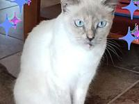 ANTOINETTE's story ANTOINETTE IS A GORGEOUS SIAMESE WHO