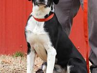 Apex's story He is 8 months old, does good with men,