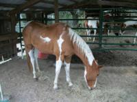 THIS MARE IS BRED TO DO IT ALL BARRELS TO COWS STARTED