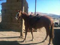 "APHA Registered 3 year old gelding....""Ira Is"