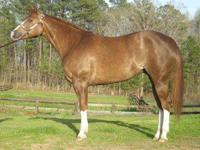 This is a nice mare at a very reasonable price. Stands