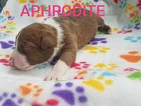 Aphrodite's story Aphrodite is a female pup from Joy