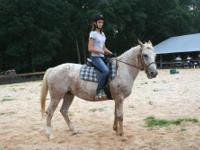 Appaloosa - Aurabelle - Medium - Adult - Female -