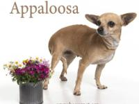 Umbrella of Hope 'Be Our Pet'7 yr old 7 lb Chihuahua