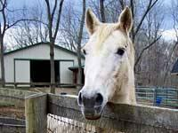 Appaloosa - Sand Dune - Medium - Senior - Female -
