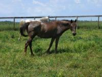 Appaloosa - Gwen - Small - Adult - Female - Horse Gwen