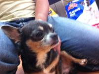 HI I have one chihuahua MALE about 4 years old, APPLE-